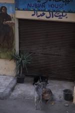 JoHempel_201503_Impressionen_Cairo_DSCF2456